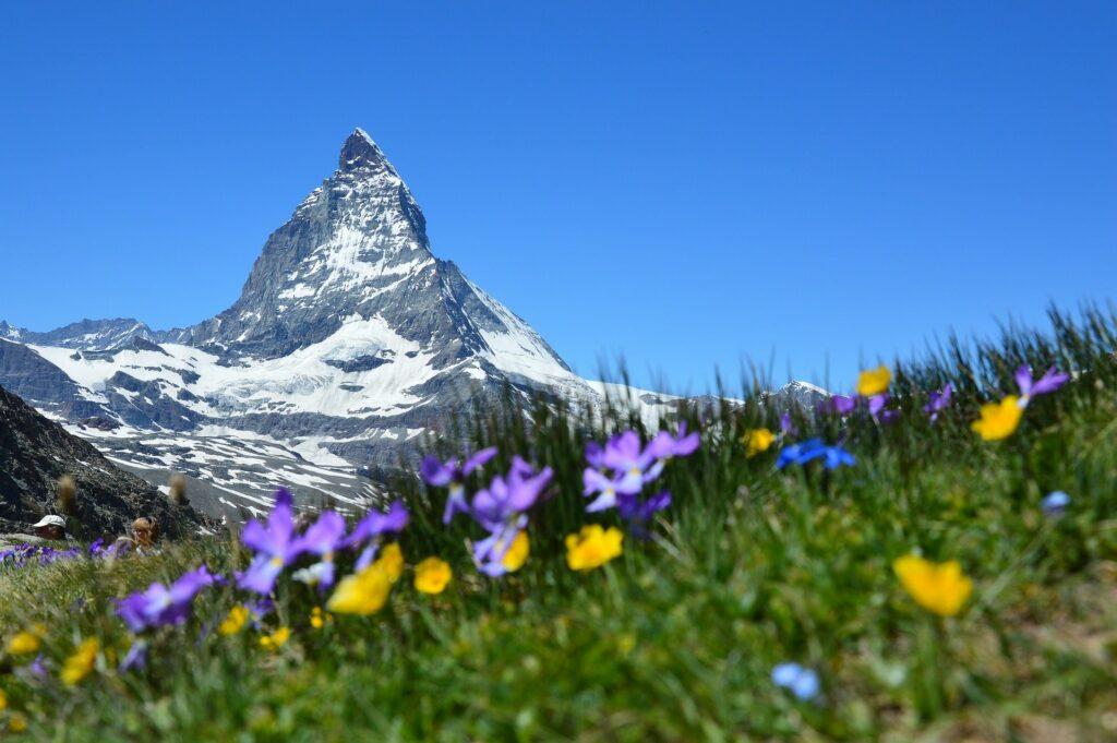 Montañas y campo floreado en Suiza